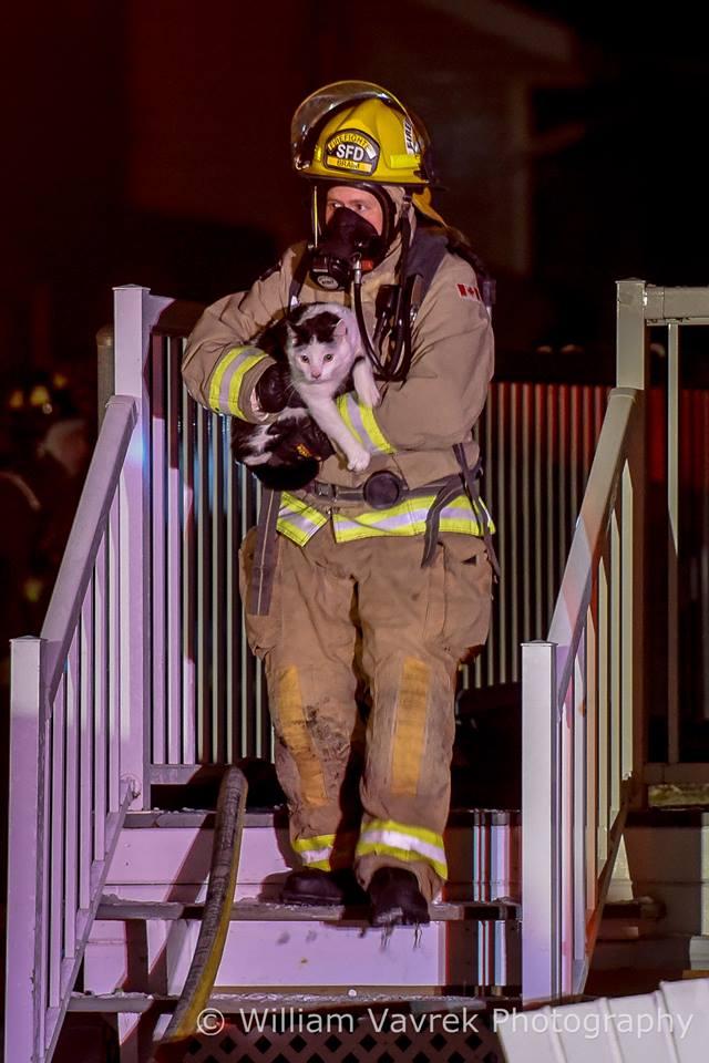 hero cat Hero Cat Alert To Owner Saving Family From Burning Home
