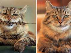 oldest domestic cat f Cats In Care Homepage   Random