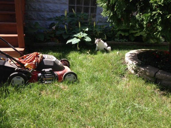Funny Face vs the lawn mower