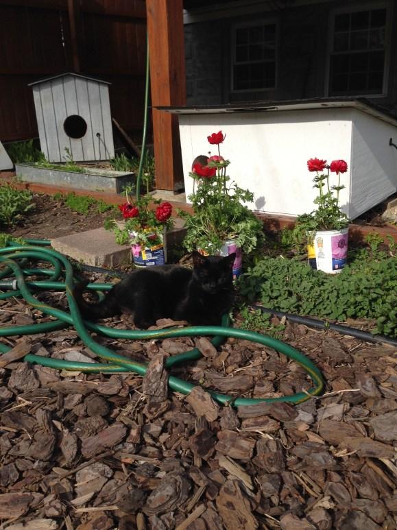 Mooha and the garden hose