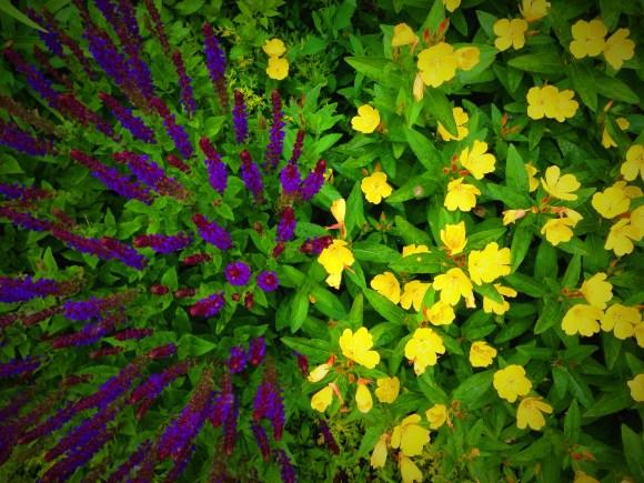 Yellow and purple make green