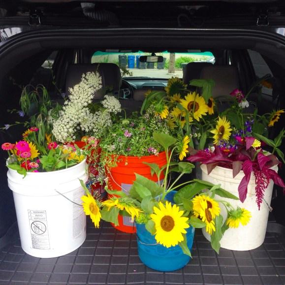 feral flowers transport