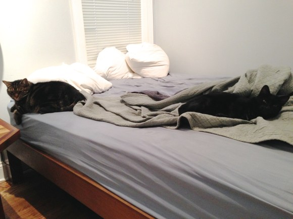 Mini and Mooha stake out their territories on the bed
