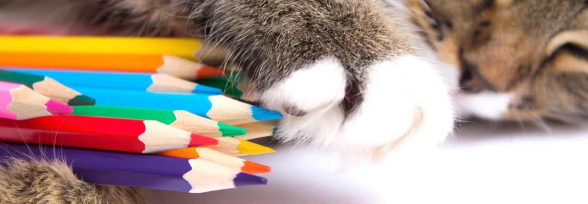 cat with colored pencils