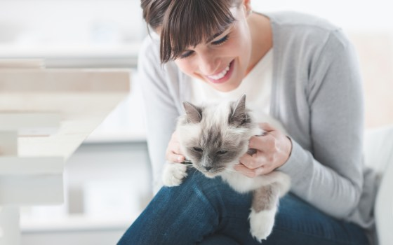What is Pet Therapy?