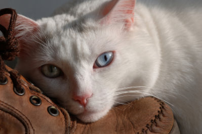Cat Euthanasia Putting Your Cat To Sleep Decisions To Make