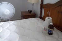 Cleaning Cat Urine from a Mattress. The cat peed on the bed!