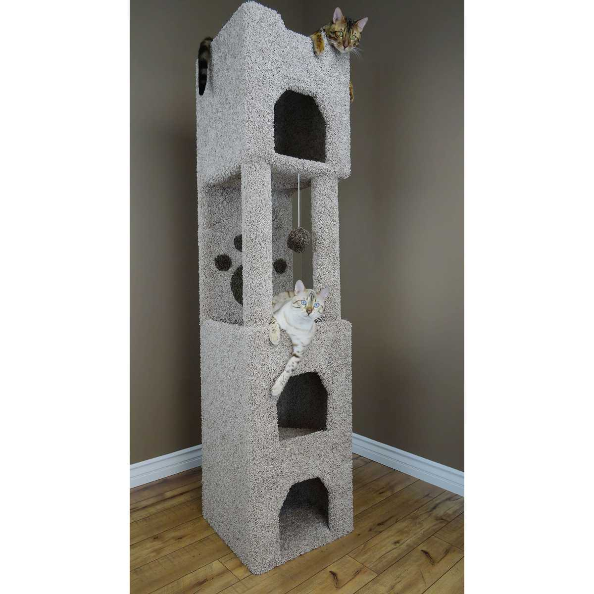 cat s choice 6