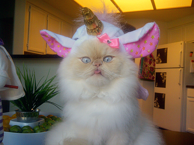 Bildresultat för cat dressed as unicorn
