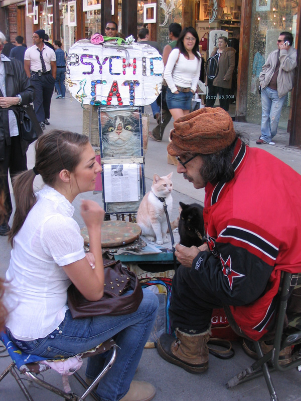 A Psychic Cat Read My Fortune But It Took Years To Come
