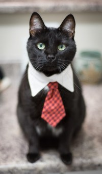 Cats in Ties: Fathers Day Must Be Getting Close - Catster