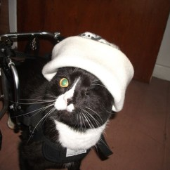 Wheelchair For Cats Toyo Revolving Chair Blacky Is The Only One Eyed Cat In New Zealand Catster Speaking Of Which According To His Facebook Page With A And He S Been Featured News Not Once