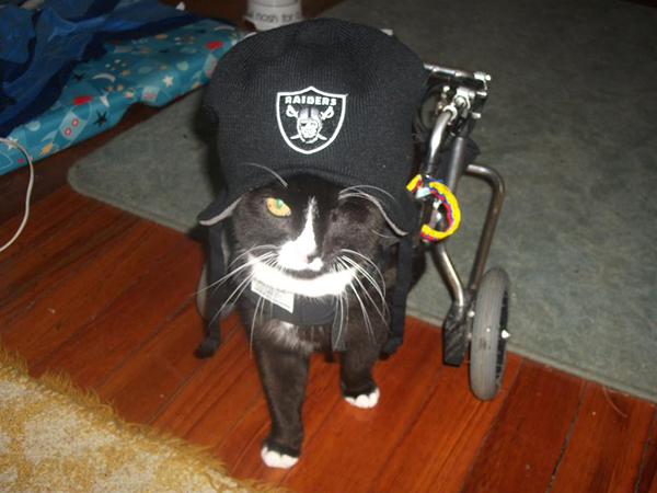 wheelchair for cats sofa chair ikea blacky is the only one eyed cat in new zealand catster
