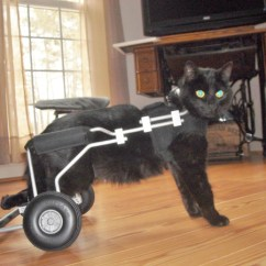 Wheelchair For Cats Dining Bench And Chairs Set Holly The Cat Lost Use Of 2 Legs But Gained Love Support Catster It S Been A Long Difficult Road As Her Caregiver States Every Step Forward Seems To Be Met With Two Steps Back Has