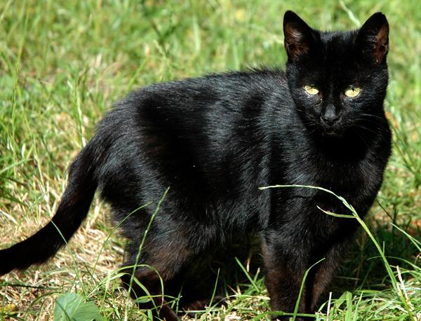 Cambios de piel de gato