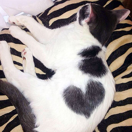 Cute Mittens Wallpaper Photos Of 12 Cats Who Wear Their Hearts On Their Fur Catster