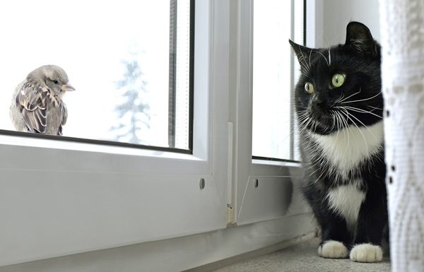 Image result for cats looking out window at birds