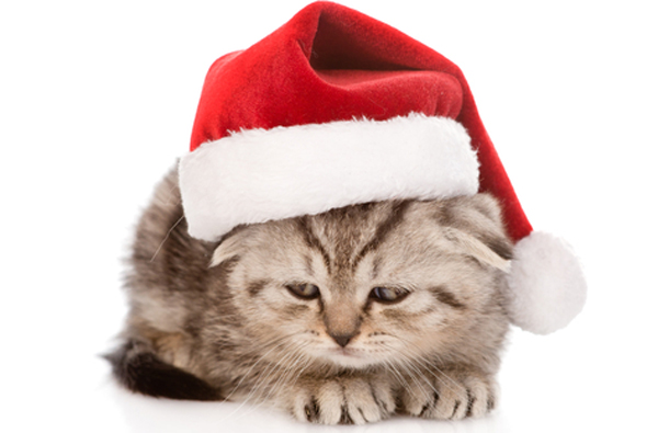 We Talk To A Cat About His Lousy Christmas Gift Catster