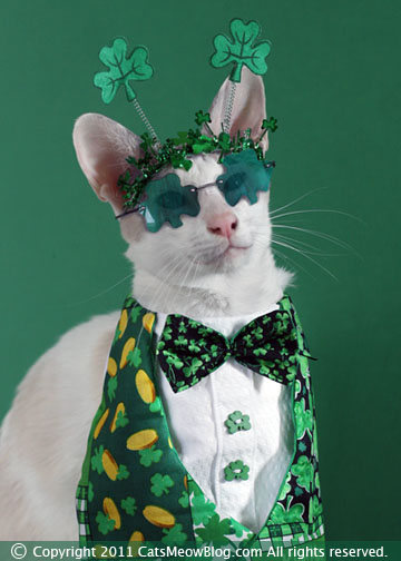 Cute Wallpaper St Pattys Day Pupppy Happy St Patrick S Day From The Cat S Meow Catster