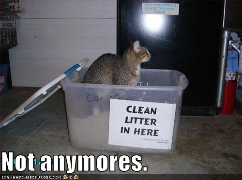 My 16 Year Quest To Find The Best Cat Litter Catster