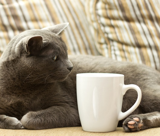 5 Daily Routines That My Cats Love to Disrupt - Catster