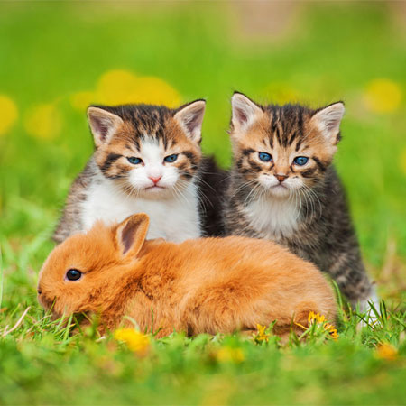 Cute Puppy Live Wallpaper International Rabbit Day Can Cats And Rabbits Live