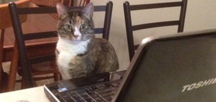 What If Cats Could Create Online Dating Profiles  Catster