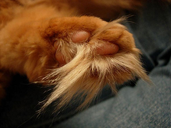 7 Cats with Luxurious Toe Floof - Catster