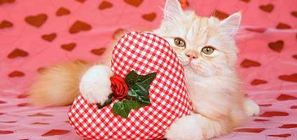 10 Cat Shaped Chocolates For Your Valentines Day Sweetie