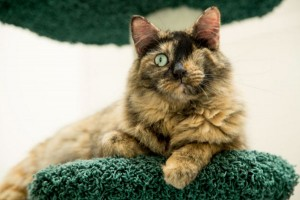 one eyed cat gina cioli