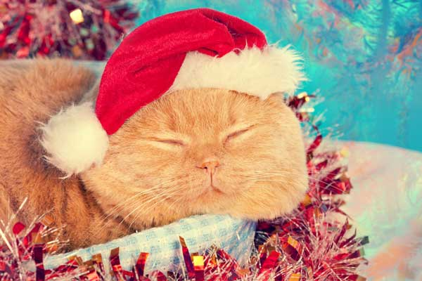 A cat with a Santa hat on, sleeping.