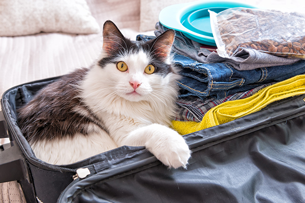 Leaving For The Holidays Tips On Holidays And Cat Care Catster