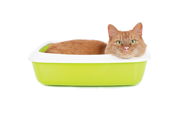 An orange tabby cat hangs out in a yellow litter box.