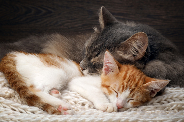 Two happy cats cuddle together.