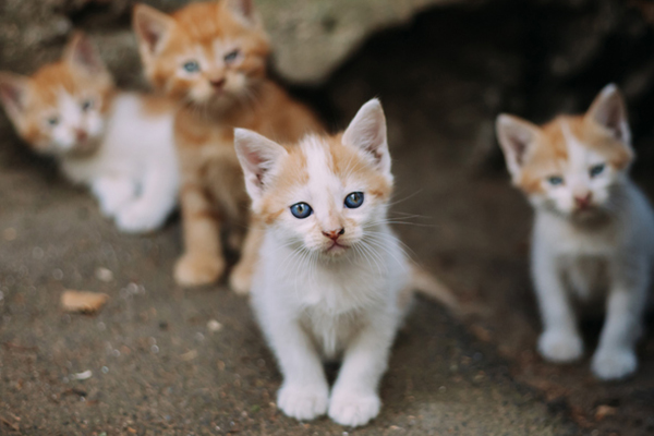 Feral kittens outside.