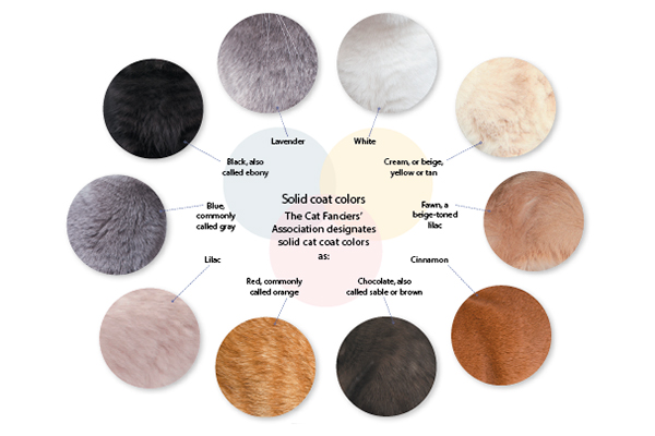 Cat colors chart. Photography © Thinkstock Images.