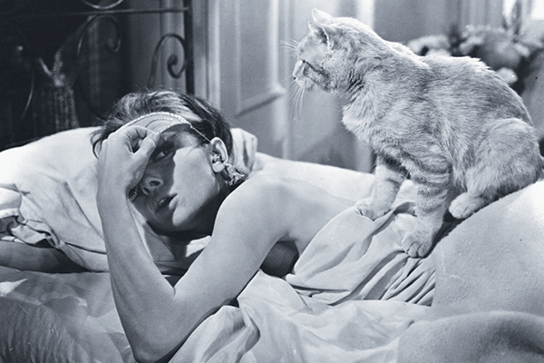 Orangey the cat in Breakfast at Tiffany's.