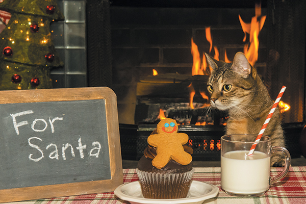 A cat by a fireplace with cookies and a cupcake.