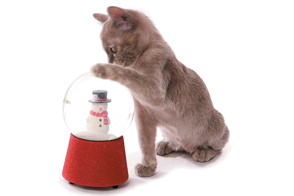 A gray cat tapping a snowglobe with a snowman inside.