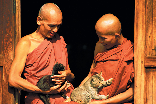 Guards of Buddhist Scriptures with cats.