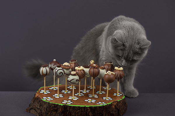 A gray cat smelling a chocolate arrangement.