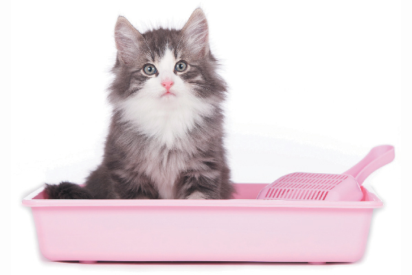 A fluffy cat in a litter box.