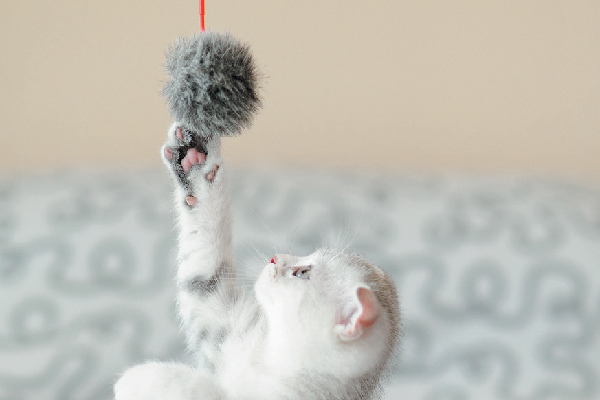 Kitten reaching out for a toy or ball.