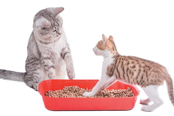 Just because a natural cat litter claims to be flushable doesn't mean it should be. Photography ©Assja | Getty Images.