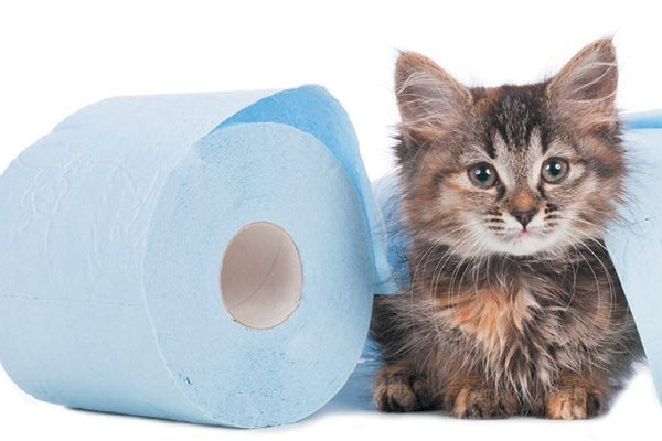 It's okay if your kitten has some accidents along the way. Photography ©absolutimages | Getty Images.