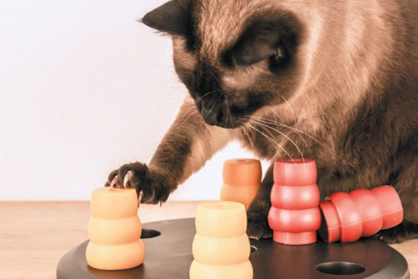 Games are important if your cat doesn't have much human company. Photography ©kicia_papuga | Getty.