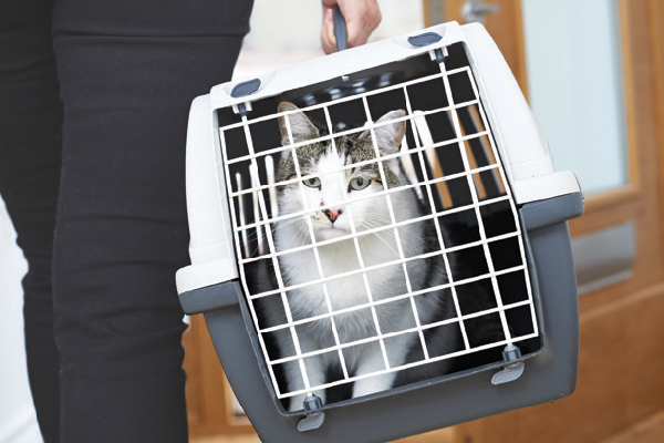 A cat looking out of a carrier.