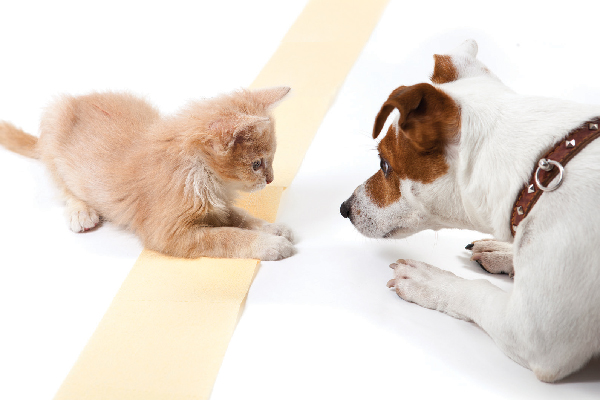 A young cat or kitten playing with a dog.