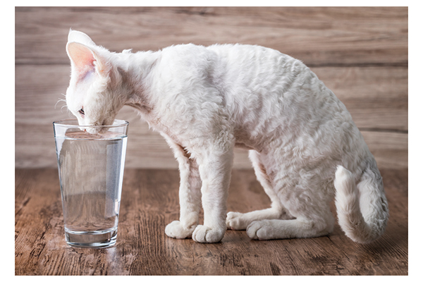 Cat drinks water from the glass. Photography by: ©Sonsedska | Getty Images