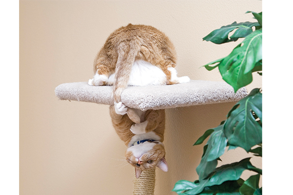 Keeping your cat active is essential to keeping her happy and healthy! Photography by: ©rsmseymour | Getty Images